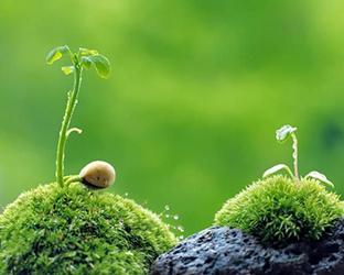 naturopathie conseils en remèdes naturels
